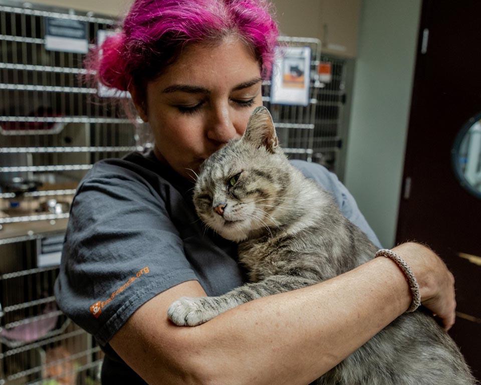 Gato adorable se deja abrazar