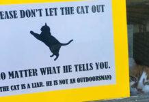 Gato astuto intenta escapar y la familia puso un cartel