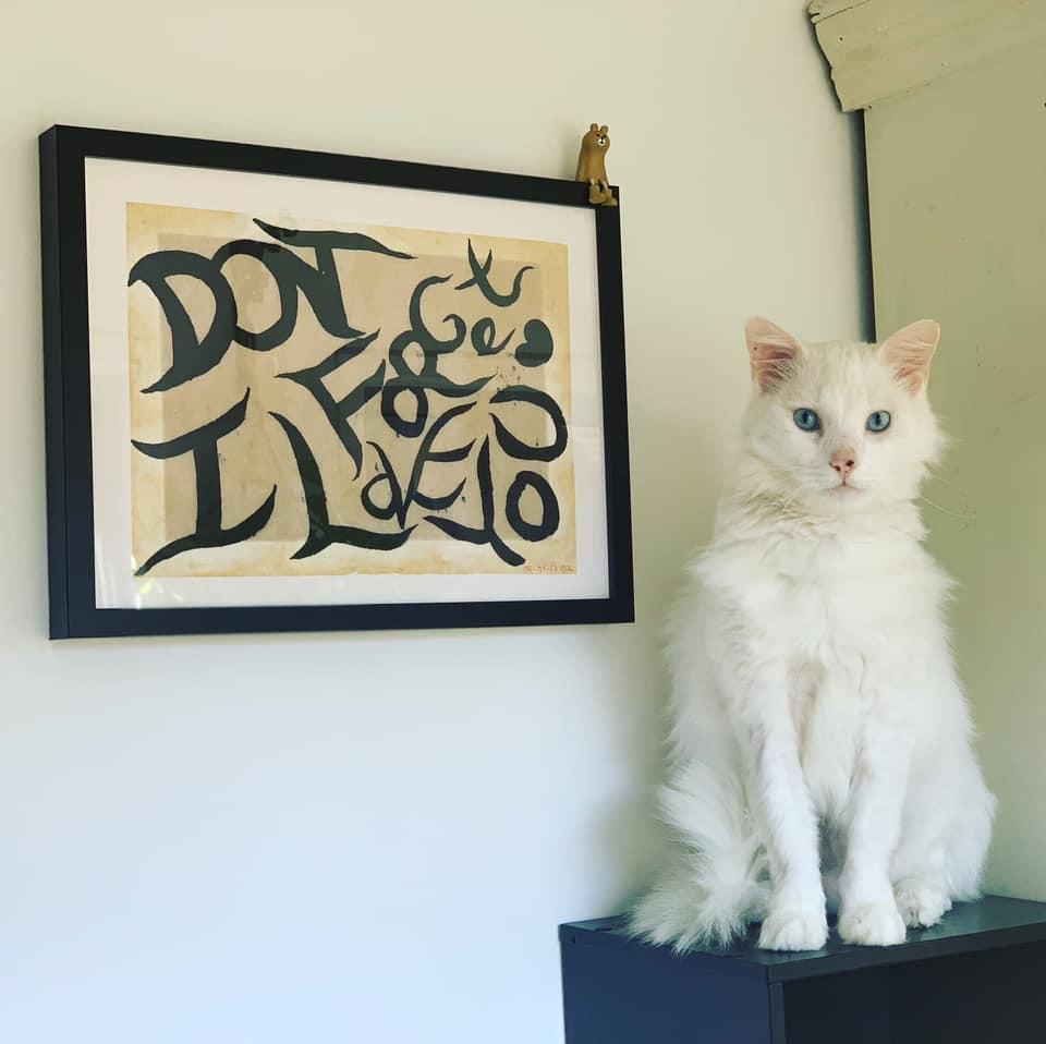 Gato y cuadro