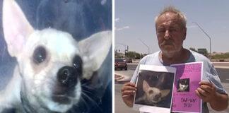 Hombre ofrece una casa a quien ayude a encontrar a su perrita chihuahua