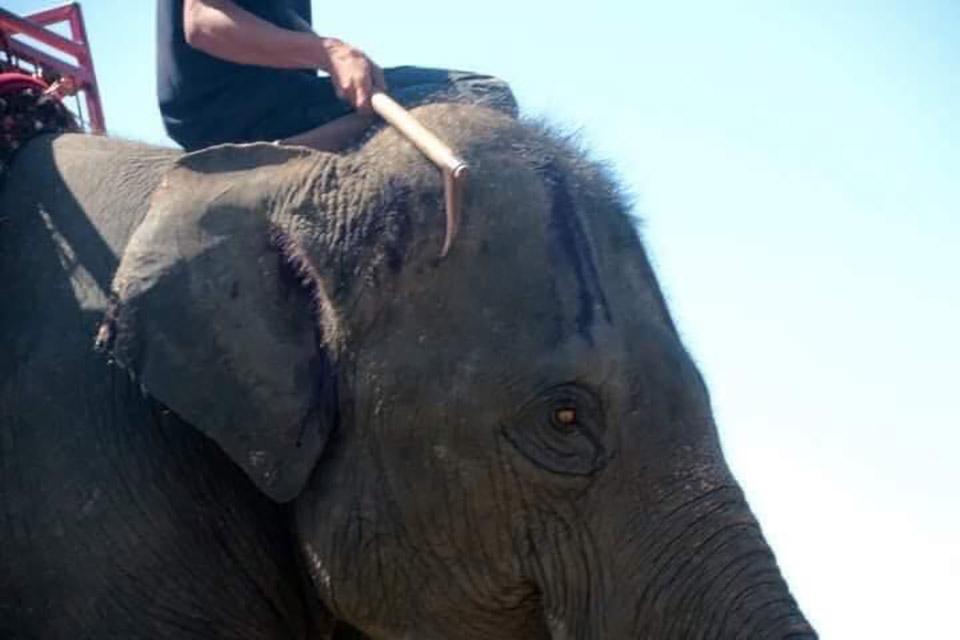 Hombre pasea con elefante