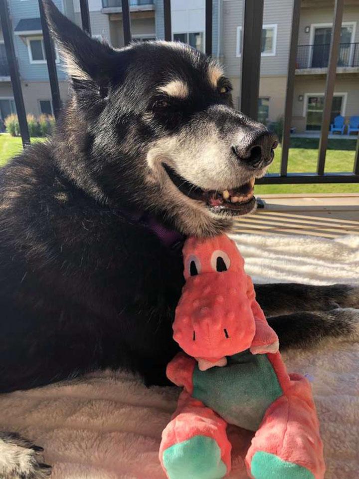 Kairi y su dinosaurio