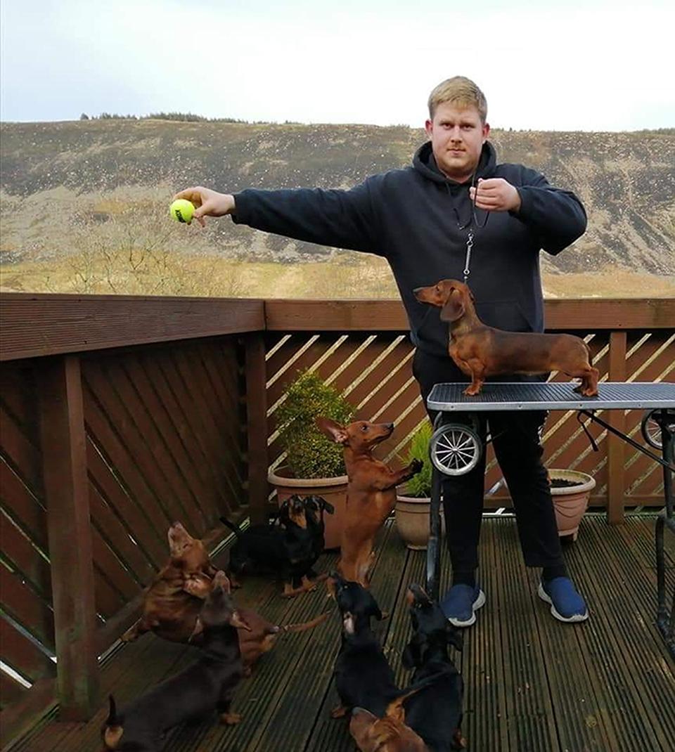 Liam y sus perros