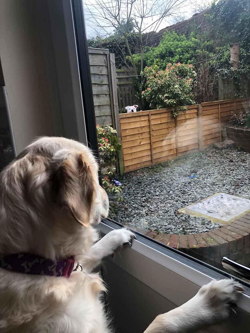 Lola mira por su ventana