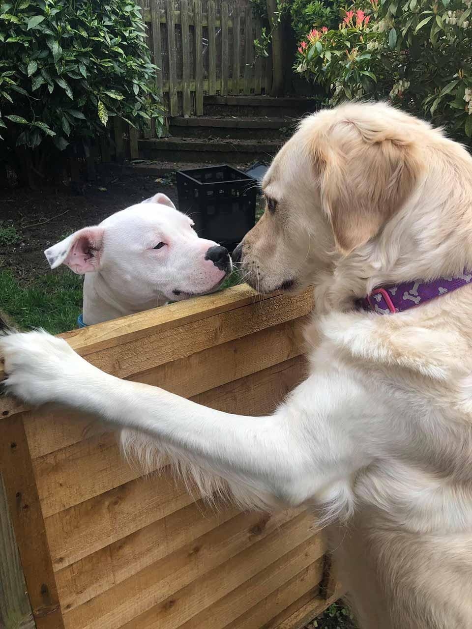 Lola y Loki se saludan
