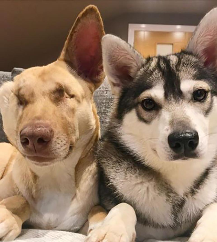 Maggie y Mishka