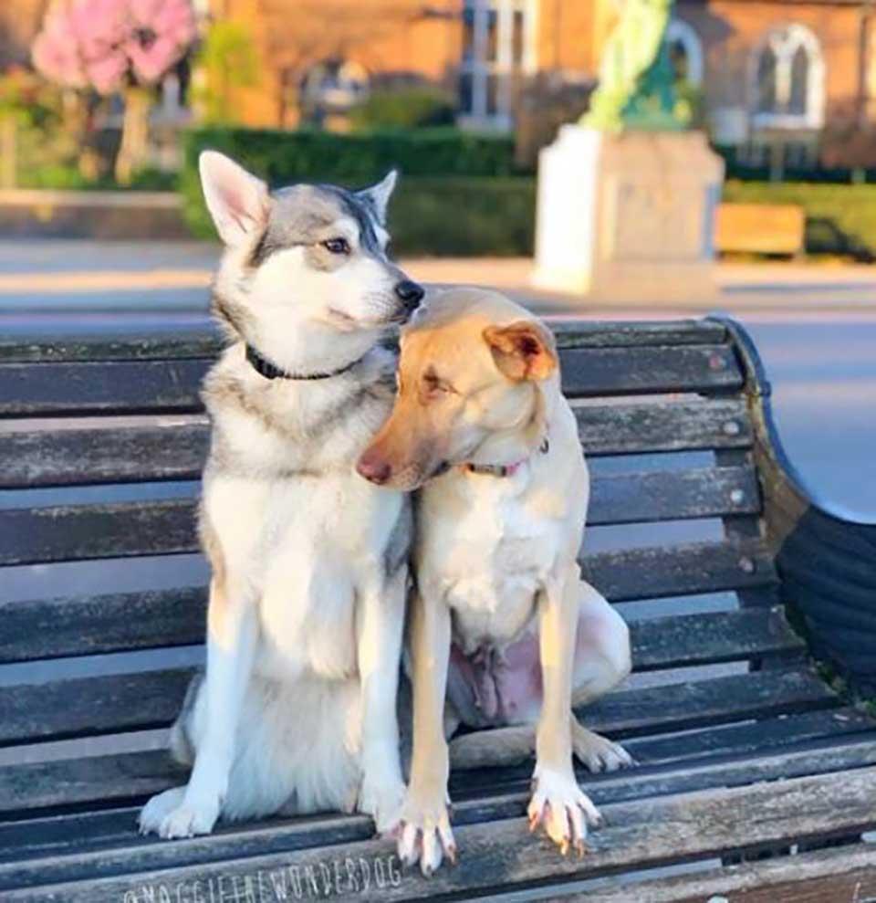 Maggie y amigo