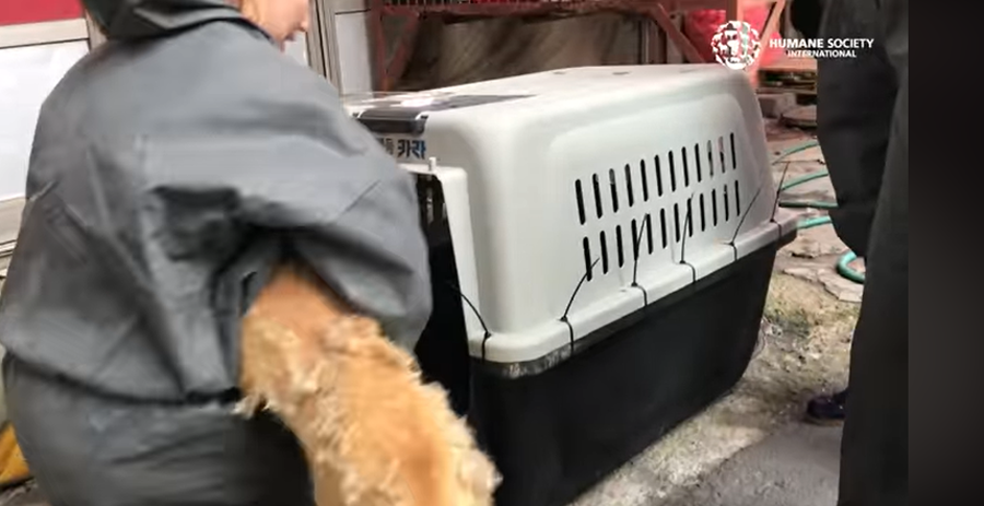 Mercado de carne de perro