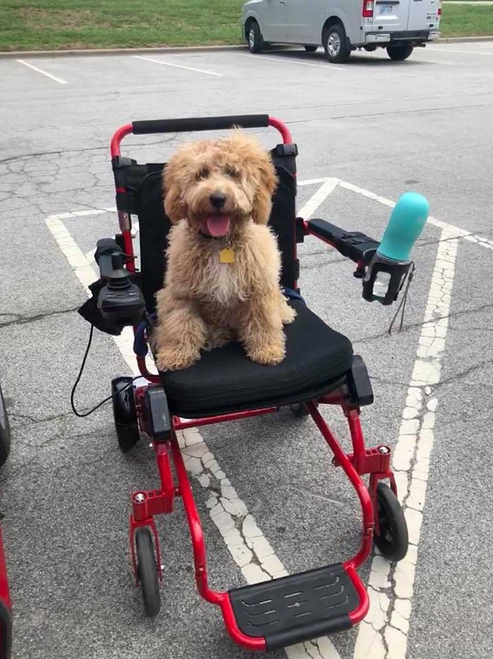 Moxie en silla de rueda de su madre