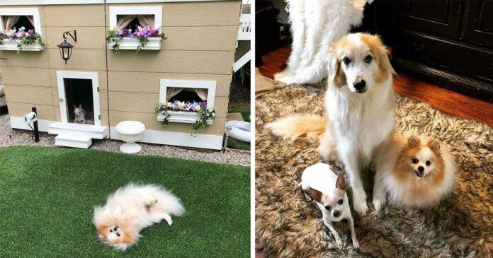 Mujer construye mansion para sus perros en el patio de la casa