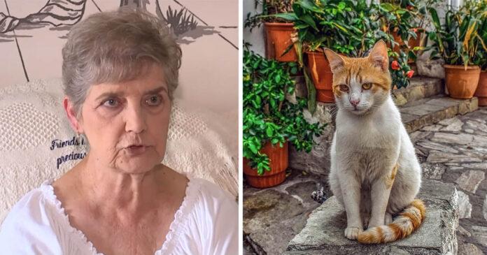 Mujer de 79 años irá a prisión por alimentar gatos