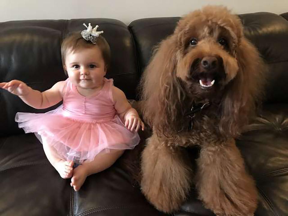 Niña y perrito en sofá