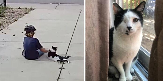 Niño es captado visitando al gato vecino