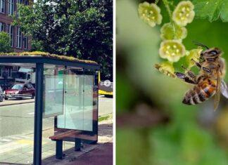 Paradas de autobús son transformadas en refugios para abejas