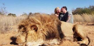Pareja se besa detrás de un león que acaban de matar en una cacería
