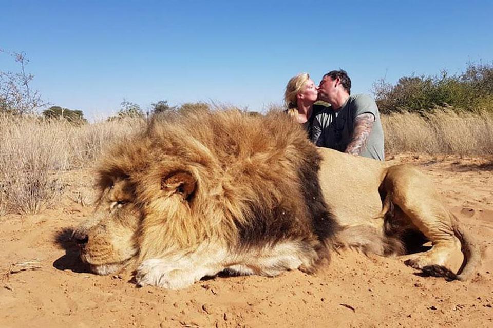 Pareja se besa y león muerto