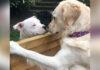 Perrita ama pasar el tiempo con su vecino y ahora son inseparables