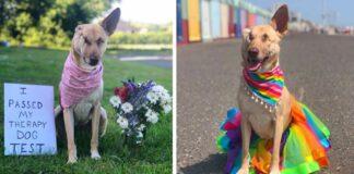 Perrita encontrada con heridas de bala se convierte en un perro de terapia