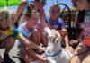 Perrito con enfermedad terminal vive el mejor fin de semana antes de morir