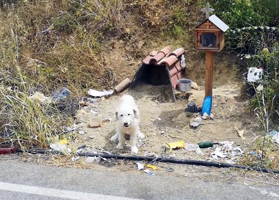 Perrito espera a su dueño