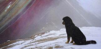 Perrito guía a los visitantes de la famosa Montaña de los Siete Colores