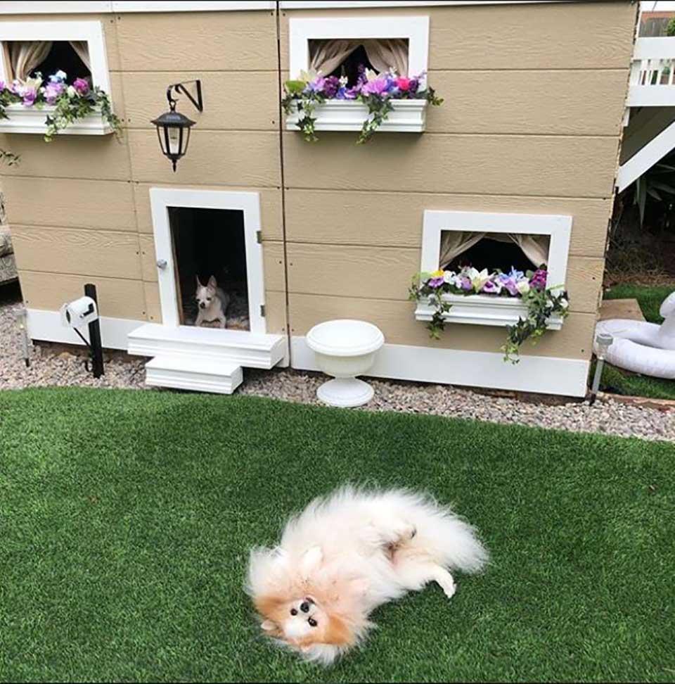 Perrito por fuera de su mansión