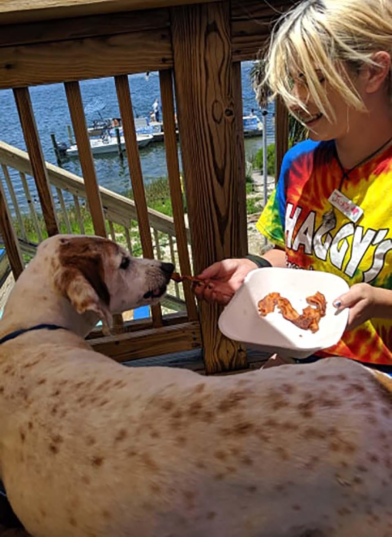 Perrito recibe alimento