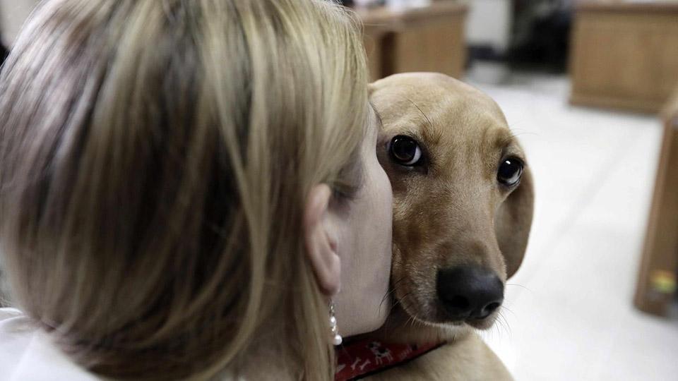 Perrito recibe beso