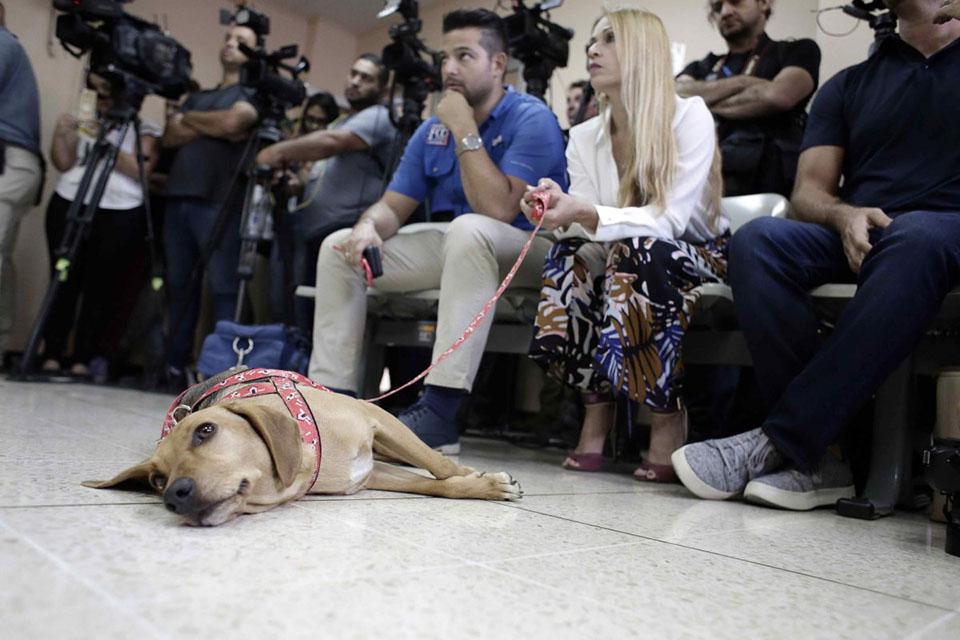 Perrito reposa durante el juicio