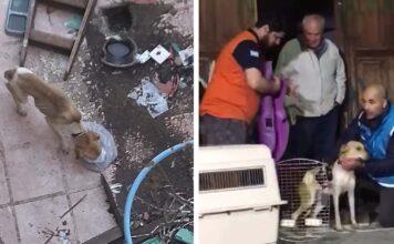 Perrito rescatado dentro de una casa paso varias semanas sin alimento