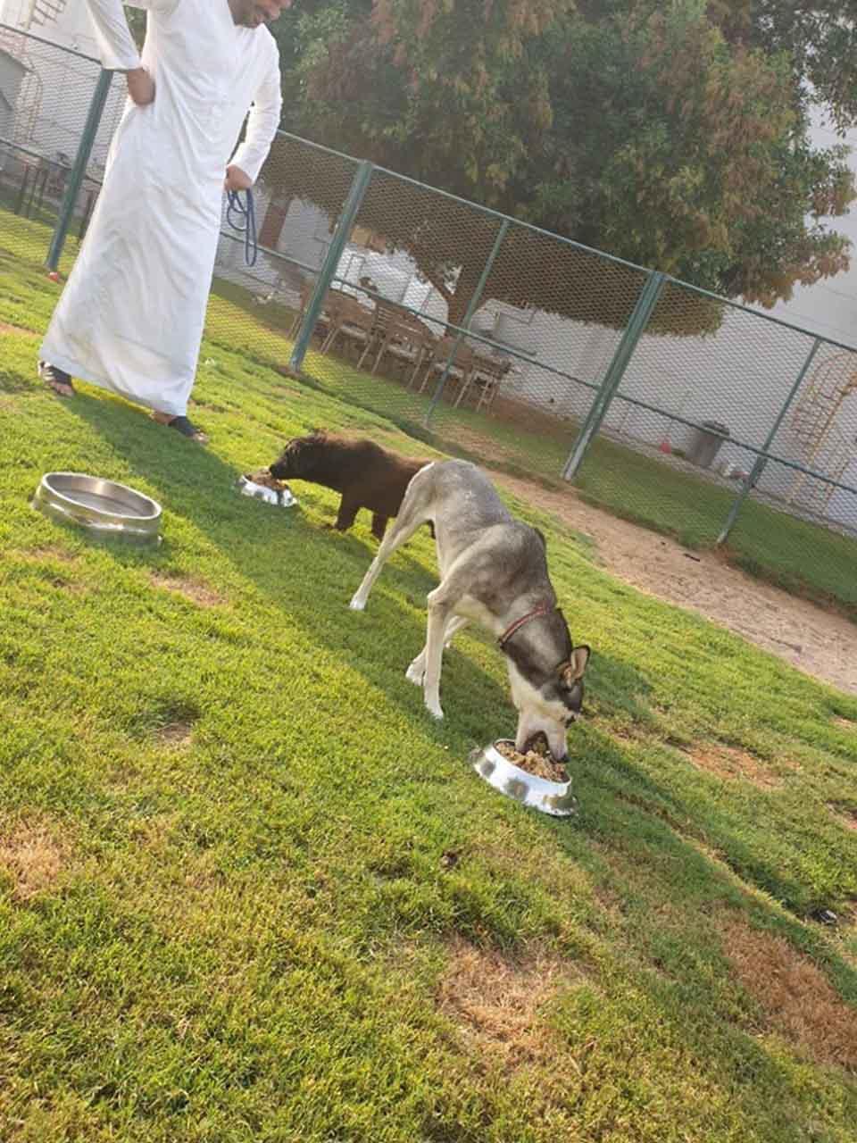 Perritos alimentándose