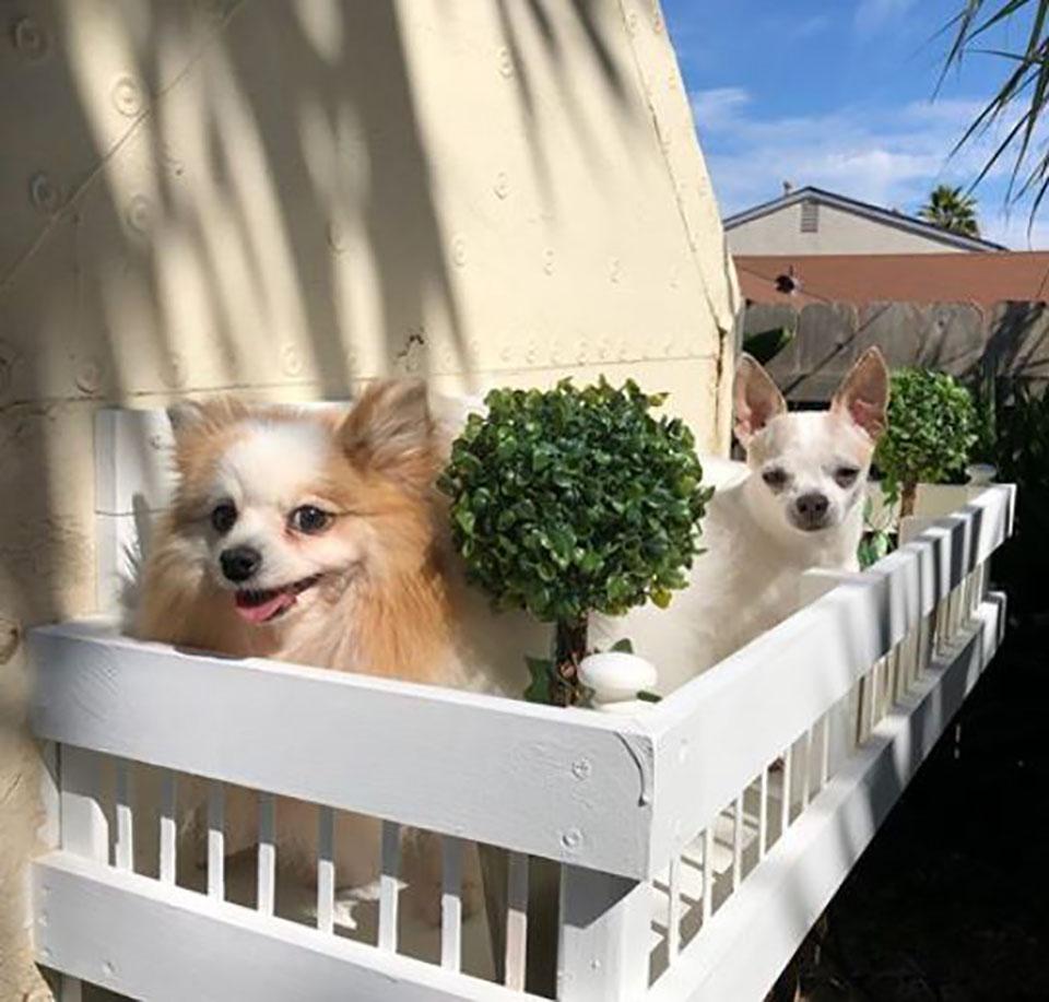 Perritos en balcón de la mansión