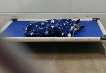 Perro abandonado se consuela acurrucándose el mismo en el refugio