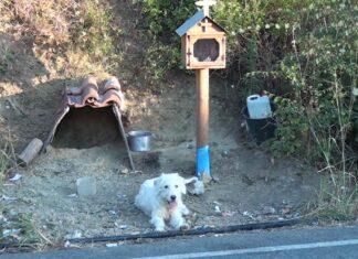 Perro espera desde hace año y medio a su dueño que murió en accidente