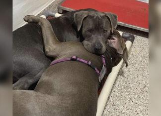 Perros del refugio se consuelan mientras son adoptados