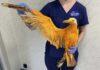 Personas rescataron a gaviota que estaba cubierta de curry y no podia volar