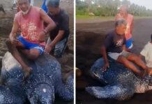 Personas se turnan para subir a una tortuga en peligro de extinción