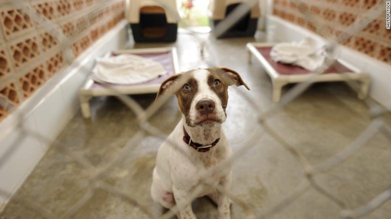 Reclusos reconfortan perros asustados en los refugios