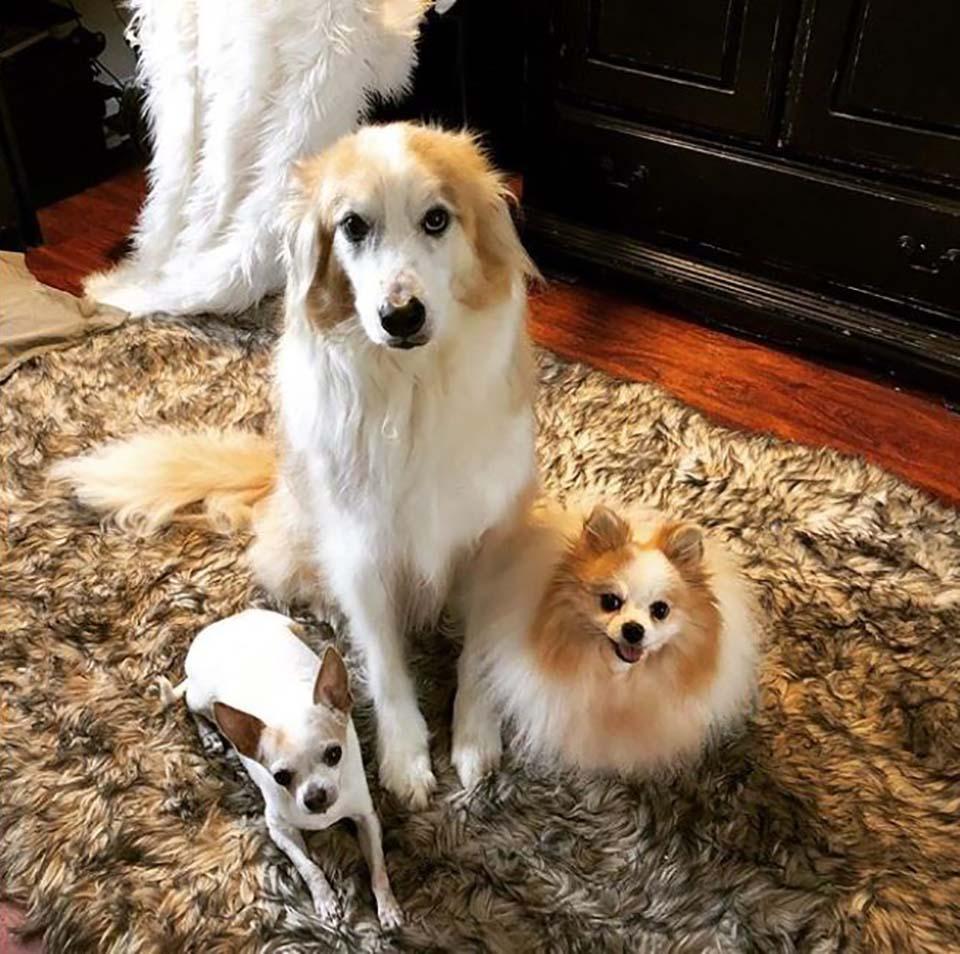 Tres tiernos perritos