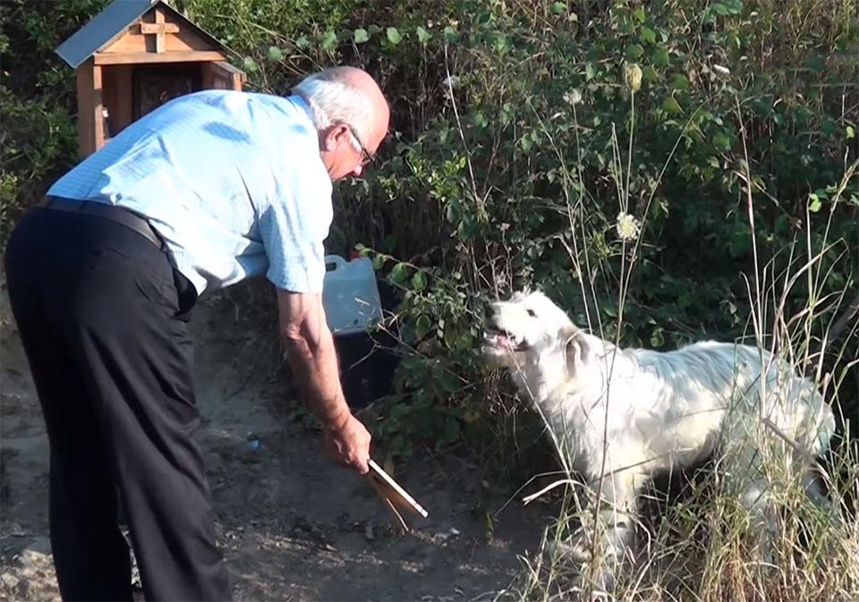 Vecino alimenta a perro fiel