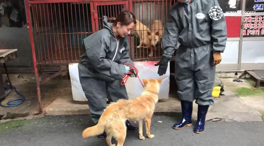 comercio de carne de perro en corea
