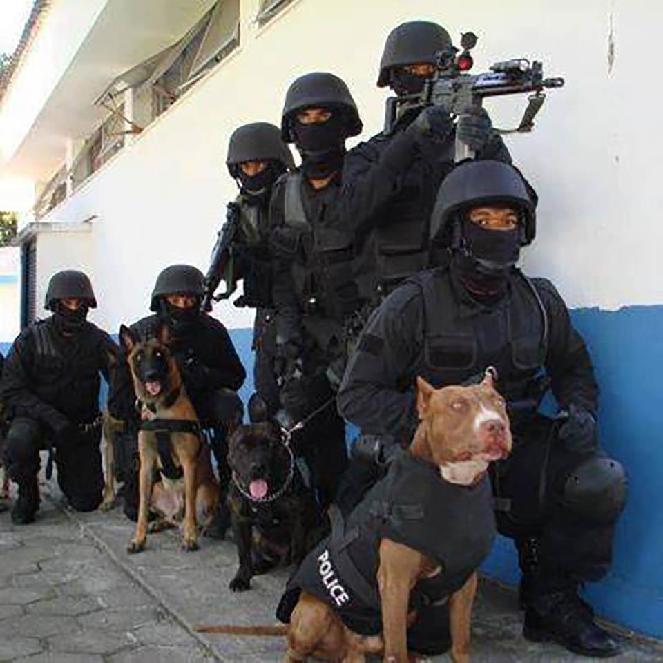 perros k9
