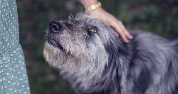 Acariciar perros o gatos reduce nivel de estrés