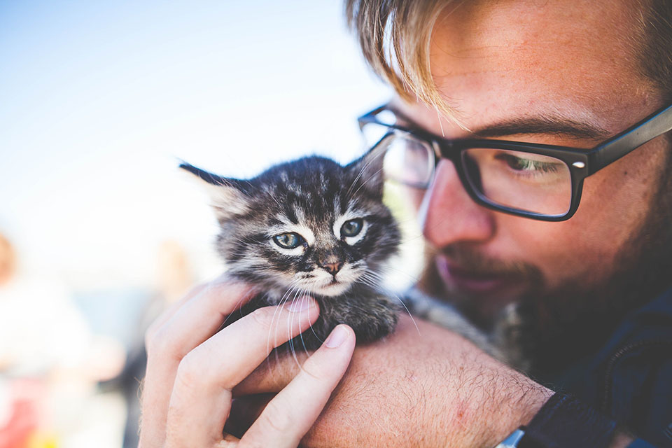 Adorable gatito recibe cariño