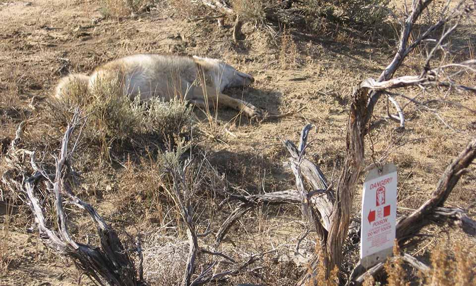 Animal muerto cerca a una advertencia de veneno