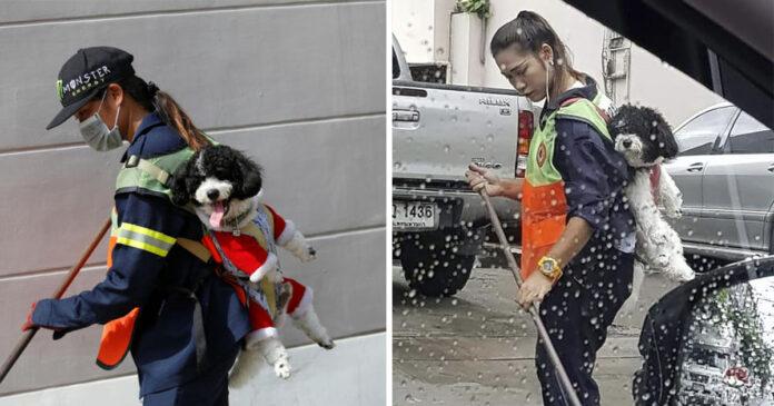 Barrendera en Bangkok lleva a su perro al trabajo