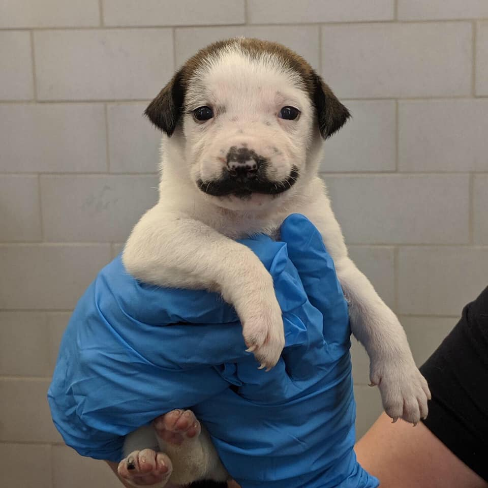 Cachorro con bigote