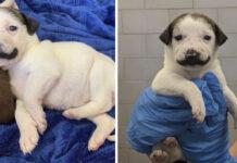 Cachorro nace con marca en forma de bigote de manillar