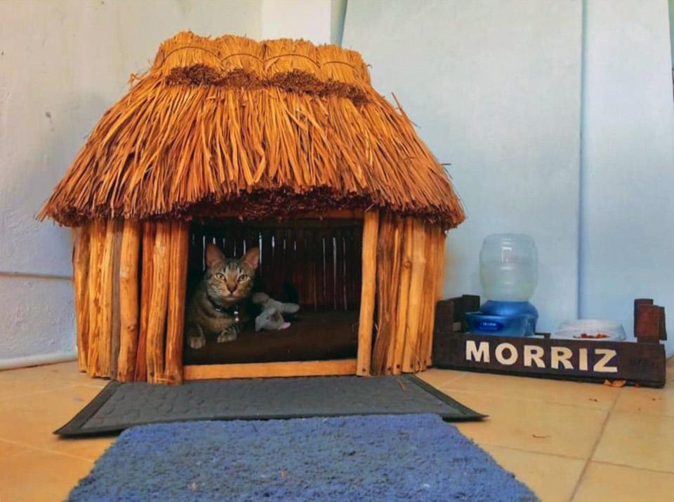 Casa maya para gato