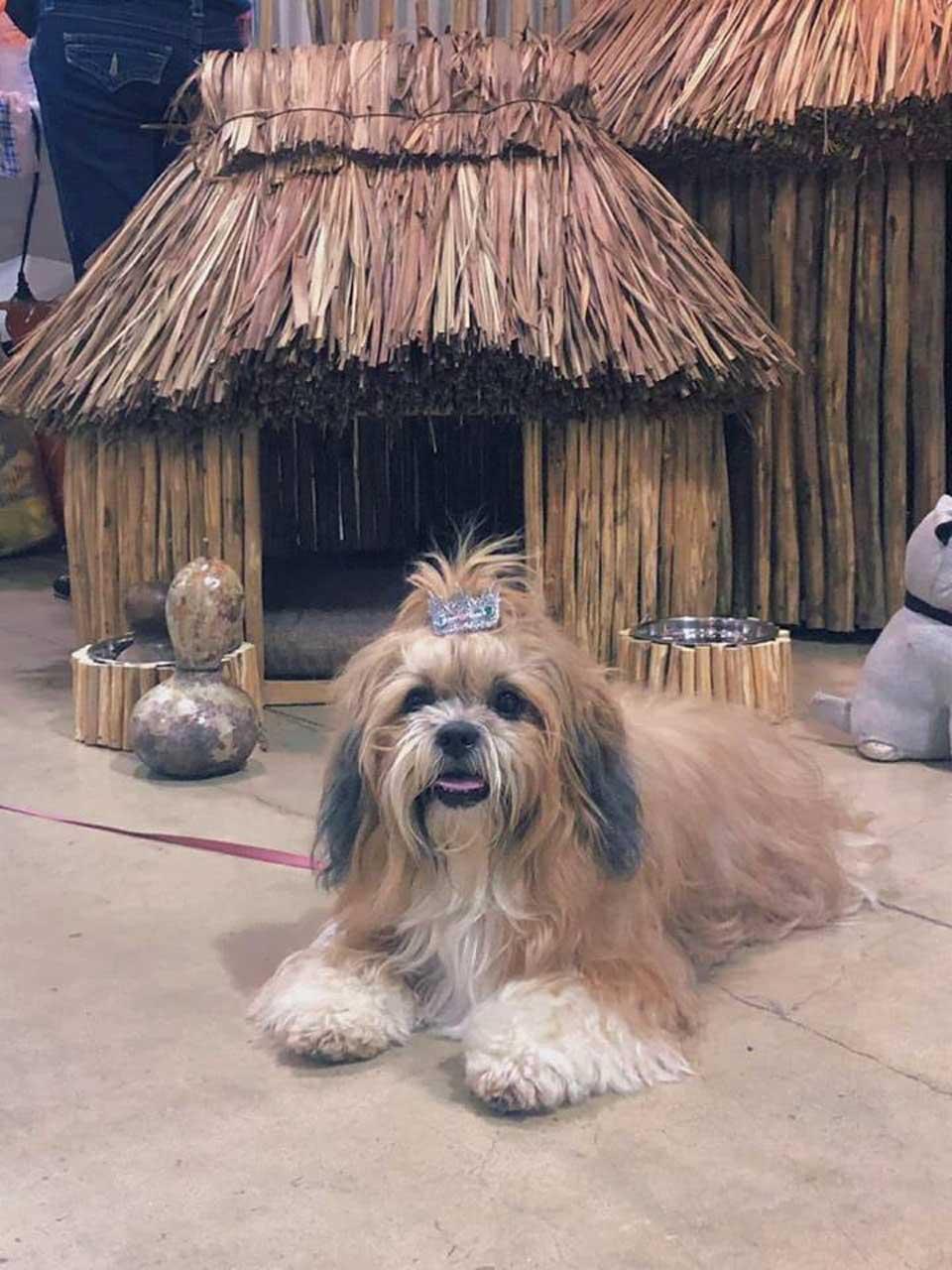 Casa maya para perrito
